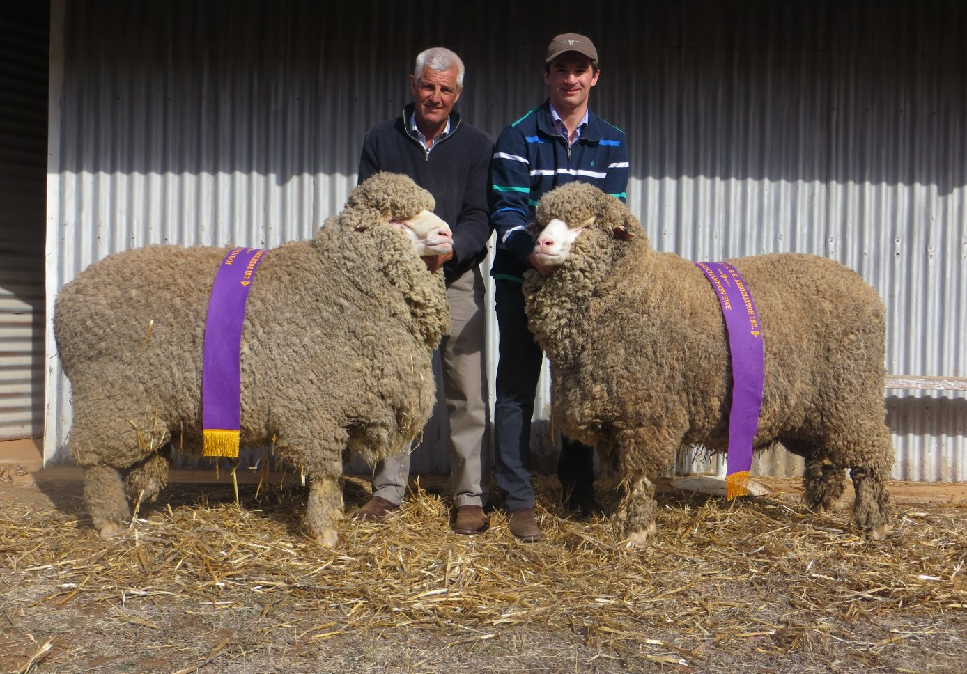 Cameron and Warick with the Grand Champion Ewe and Ram of the 2018 Peak Hill Show.